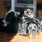 Загородная гостиница для собак